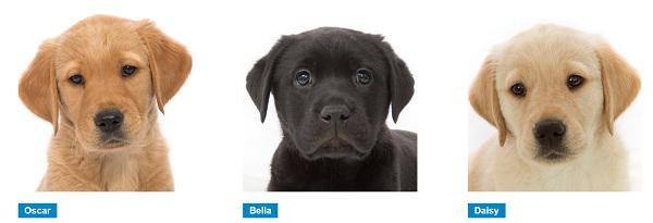 Sponsor Oscar, Bella or Daisy!
